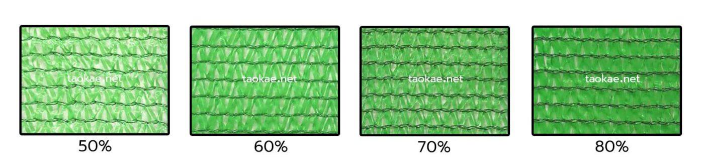 แสลน3เข็ม สีเขียว